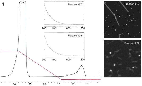 [Figure 1: HA-1 Separation of [Au3nm]-Fab-Cy5 with STEM micrographs and spectra] (52k)