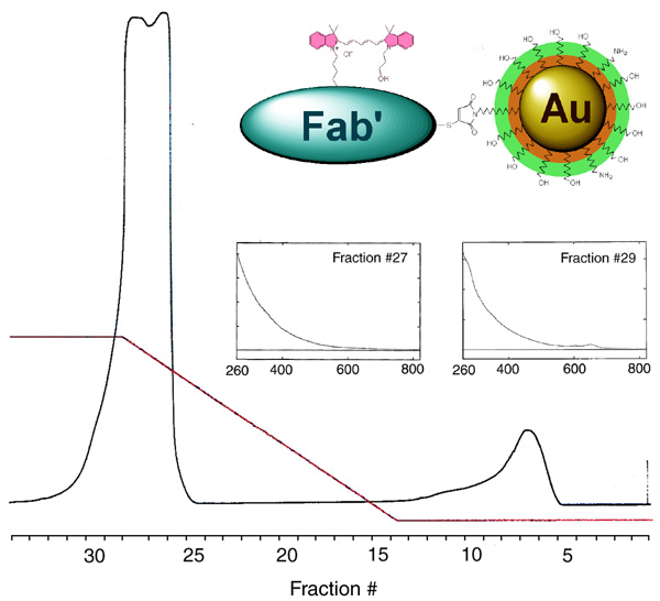 [Chromatographic separation and spectroscopic characterization of Au3nm-Fab'-Cy5 probes (77k)]