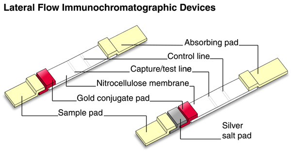 Construction of lateral flow immunochromatographic devices using colloidal gold and silver-enhanced gold [(53k)]