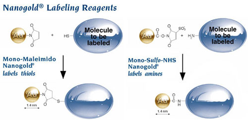 Nanogold® Labeling Reagents