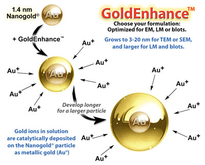 GoldEnhance™: how it works